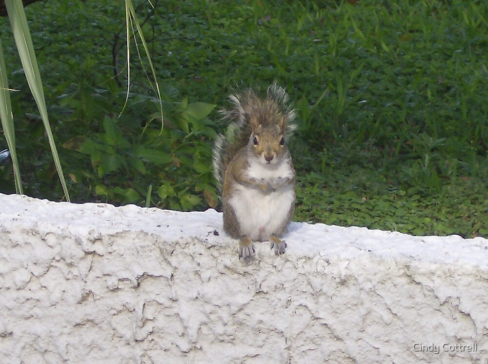 Just one more nut!! by Cindy Cottrell