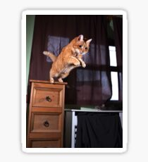 Ginger cat jumping from cupboard Sticker