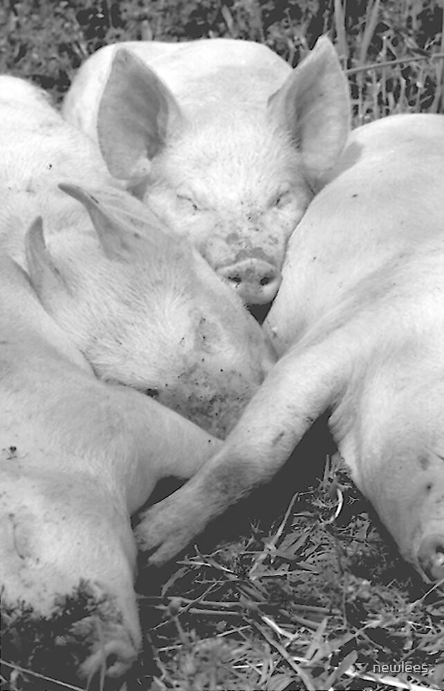 Pigs by newlees