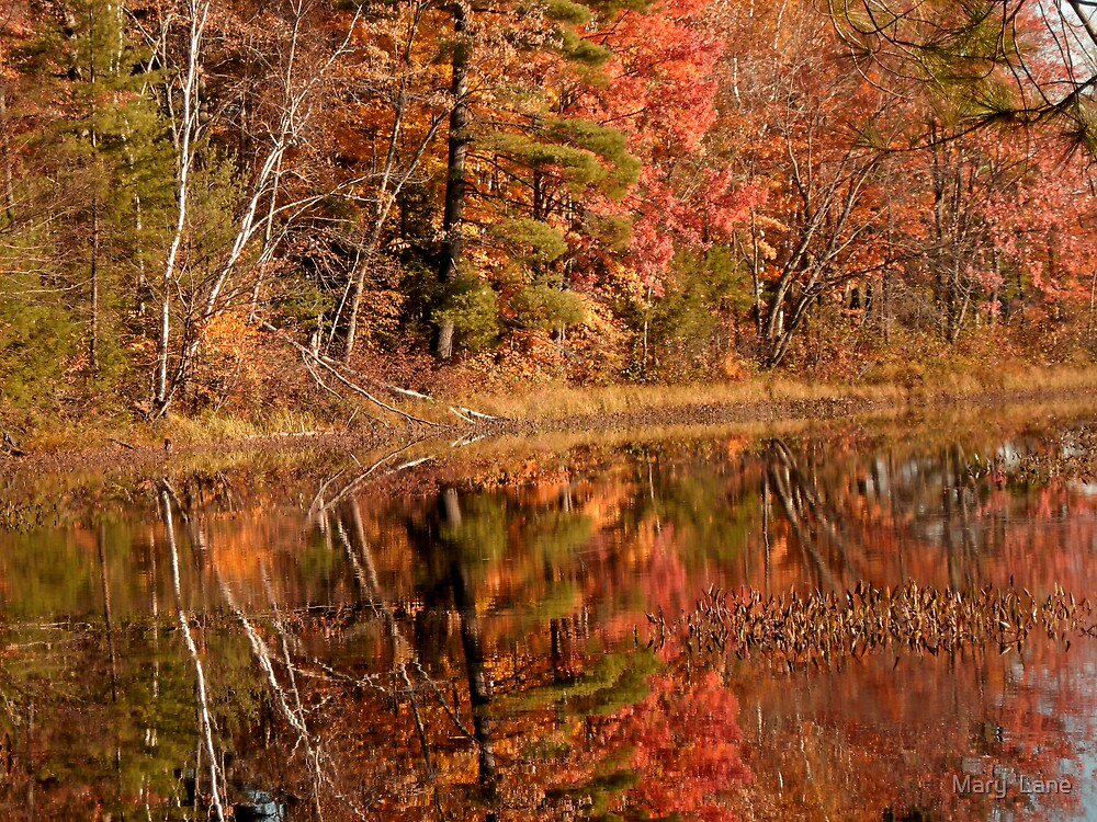 Autumn Reflections by Mary  Lane