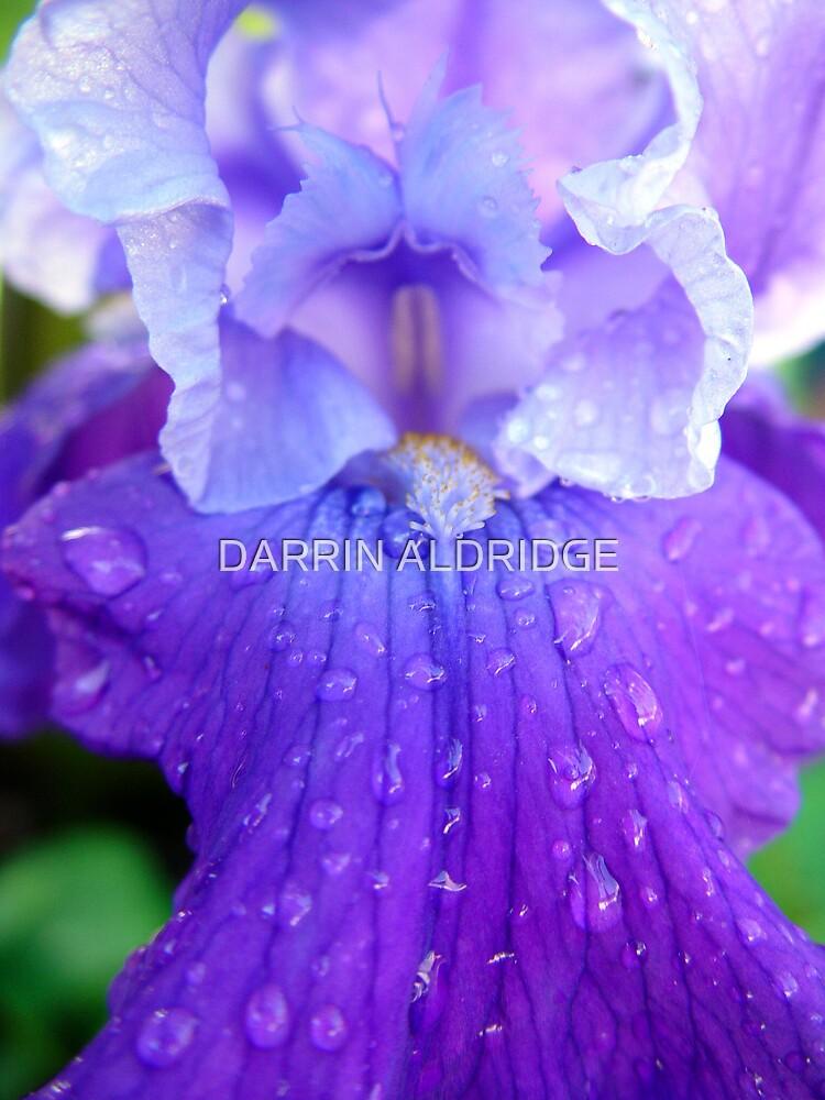 Purple Rain by DARRIN ALDRIDGE