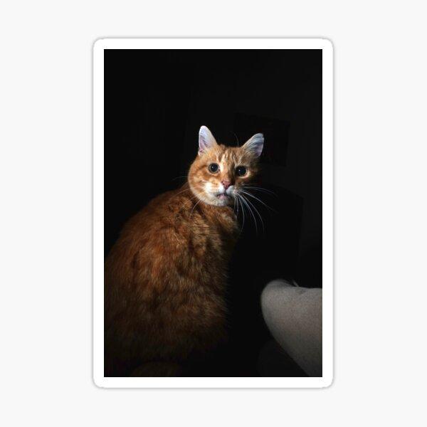 Worried cat Sticker