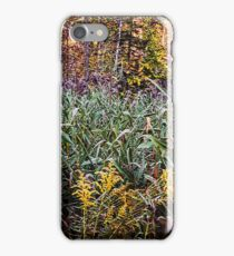 Beautiful Fall Foliage In The Forest iPhone Case/Skin