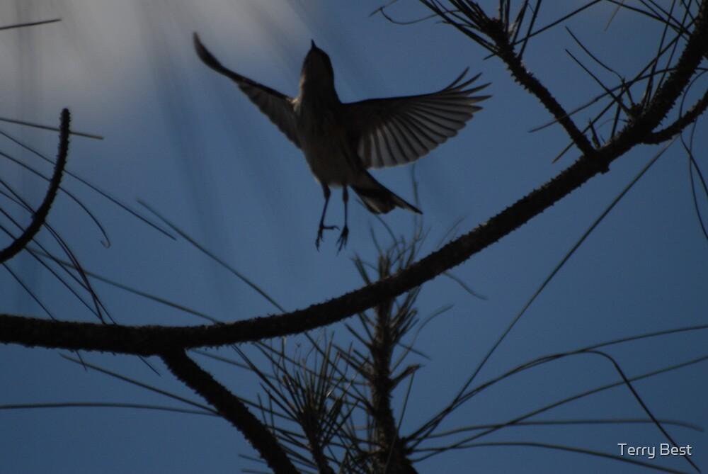 Flight by Terry Best