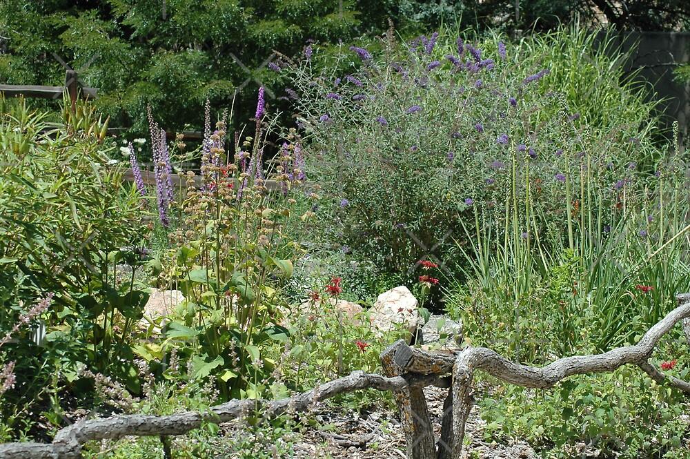 Hummingbird Garden by Holly Werner