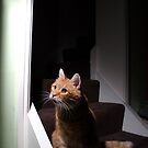 Ginger cat sat at bottom of stairs by turniptowers