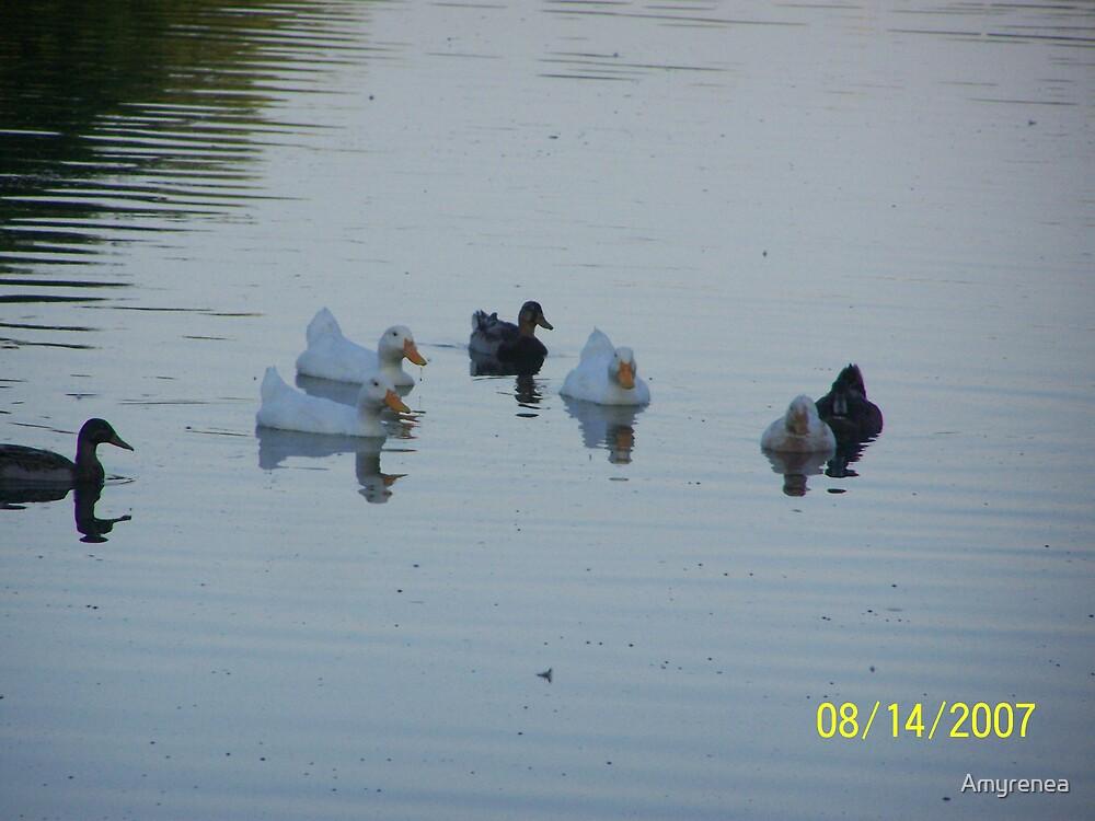 Ducks by Amyrenea