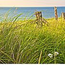 Grasses, Wildflowers and Ocean by John Butler