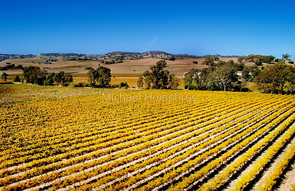 Vines of Barossa Valley by Michael Humphrys