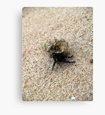 macro crab Canvas Print