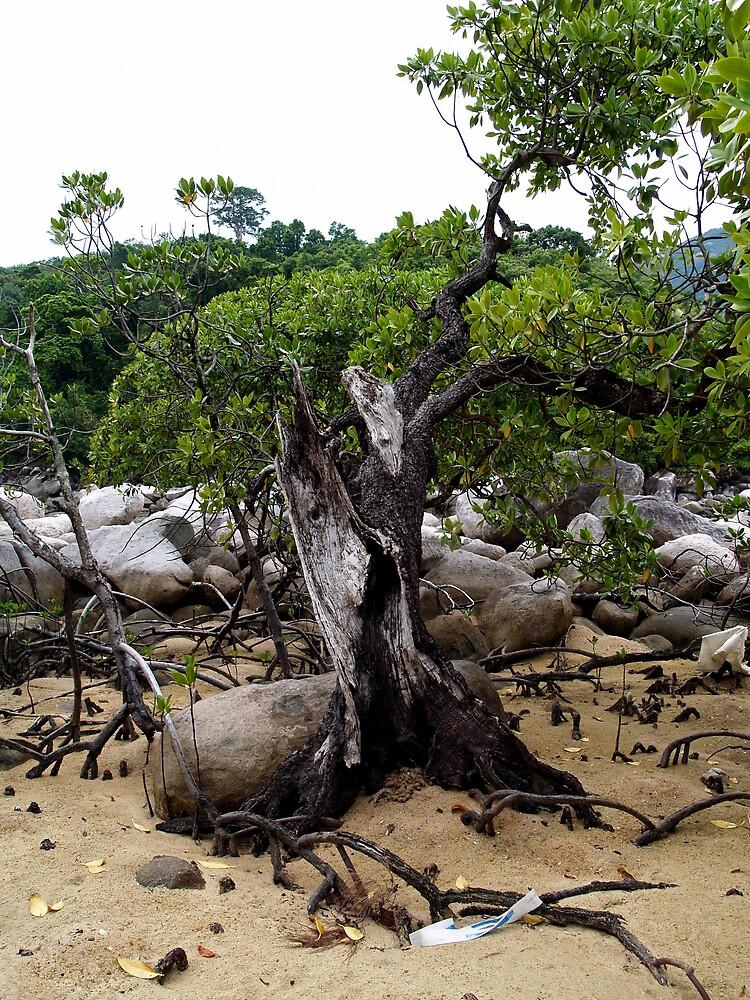 tree by lauren lederman