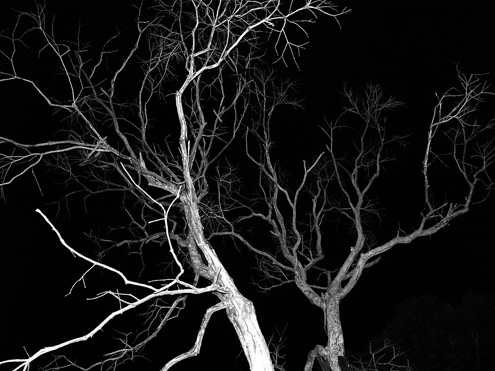 like lightning like tree by lauren lederman