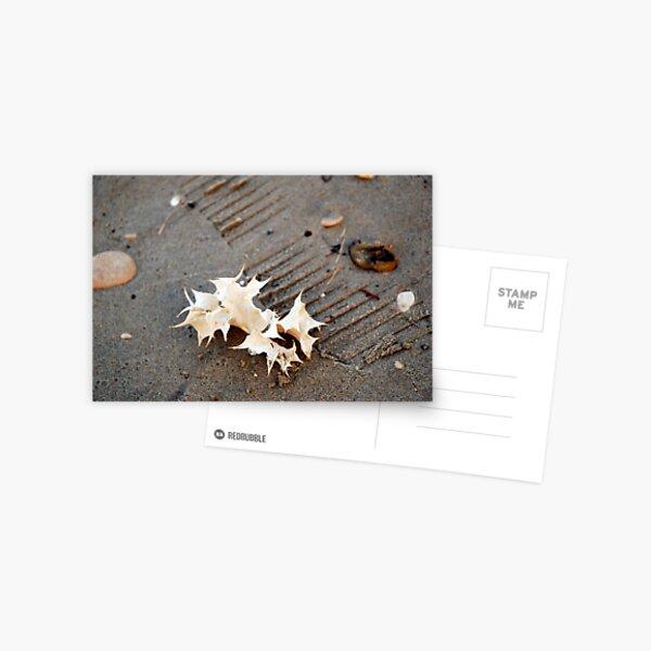 seaholly Postcard