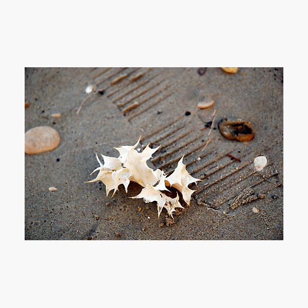seaholly Photographic Print