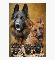 German Shepherd Family Collage Photographic Print