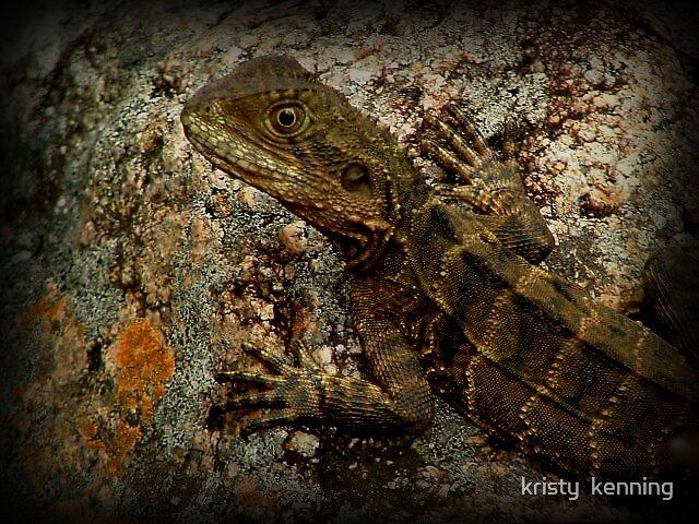 lil lizard by kristy  kenning