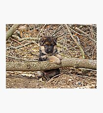 Puppy and Log Photographic Print