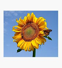 sunflower & butterfly meet up Photographic Print