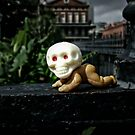 Skull Baby in Jackson Square by barbsobel