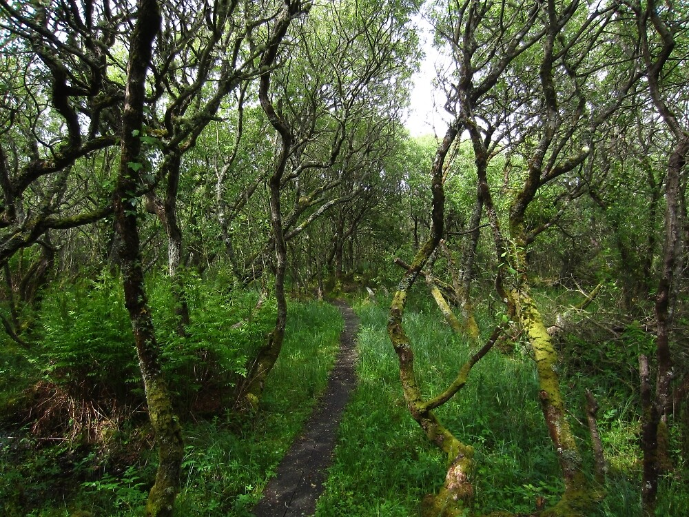 Ballaugh Curraghs by IOMWildFlowers