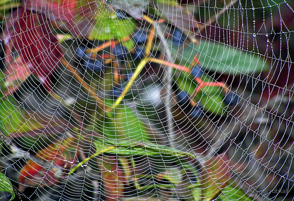 Web of Intrigue by robkal