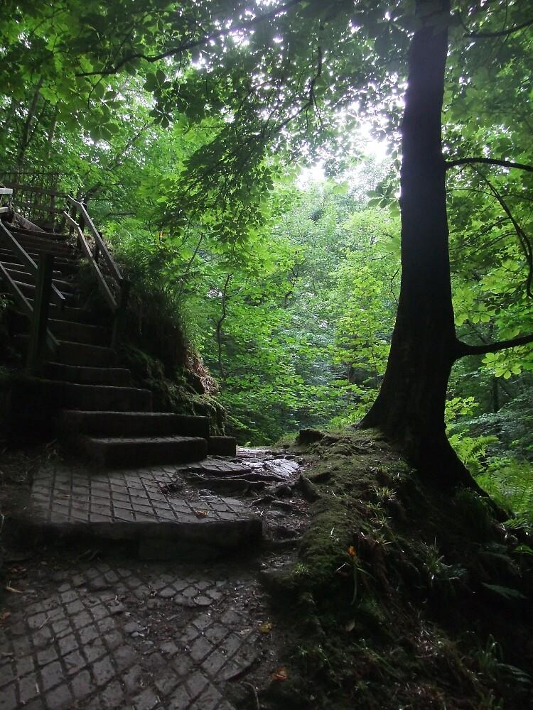 Glen Maye by IOMWildFlowers