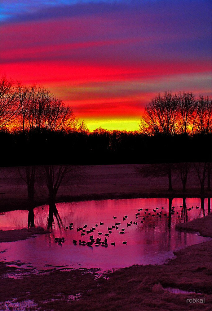 Ducks at Dawn ! by robkal