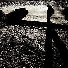 Follow by Caligari