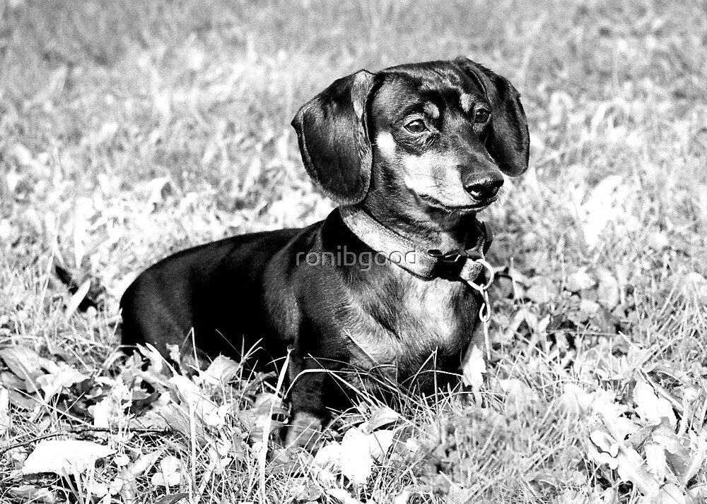Macy Black and White by ronibgood