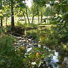 Pleasant Brook by Adam Huckfeldt