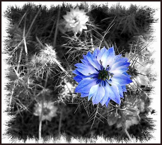 Blue by Rachael Taylor