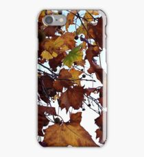 Sycamore Leaves Against the Sky iPhone Case/Skin