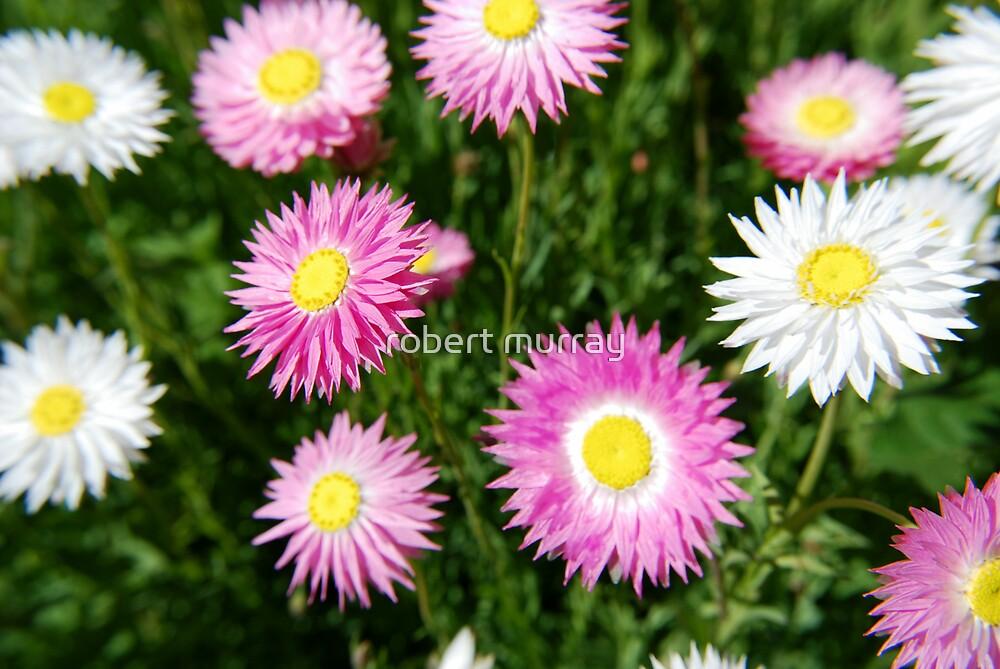 paper daisy #2 by robert murray