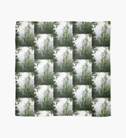 Grass on the banks of the Rideau River, Ottawa 2 Scarf