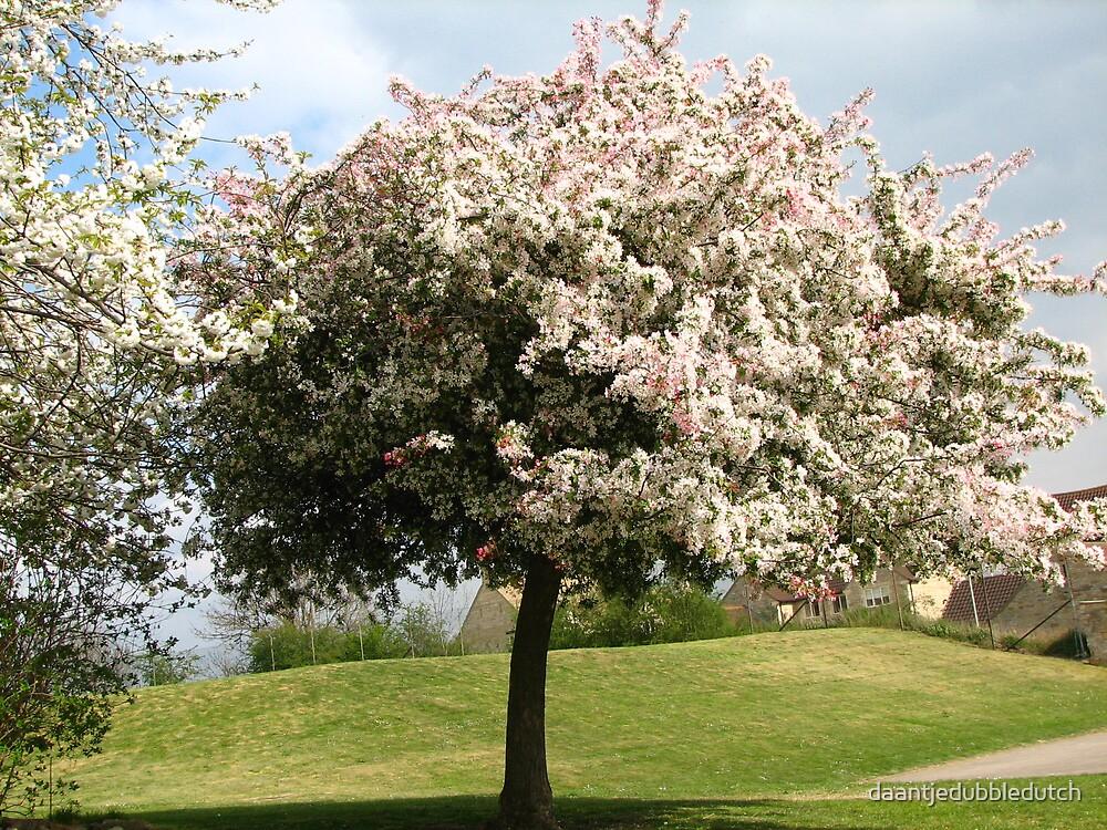 blossom tree by daantjedubbledutch
