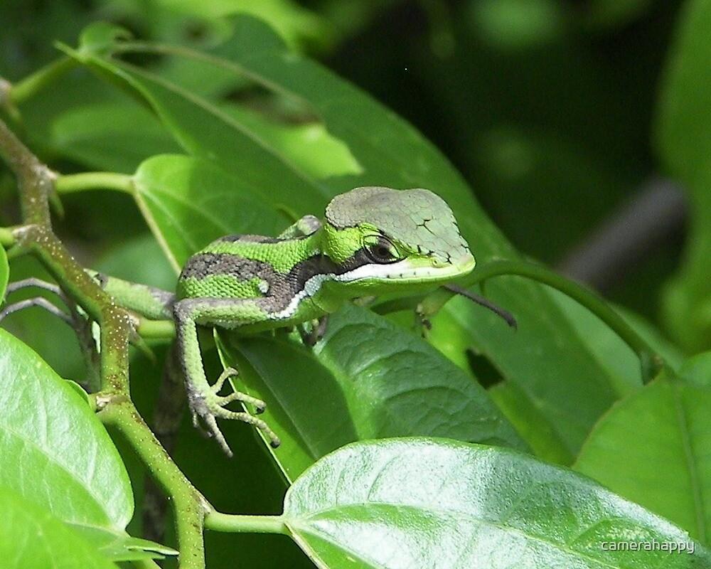 Little Lizard by camerahappy