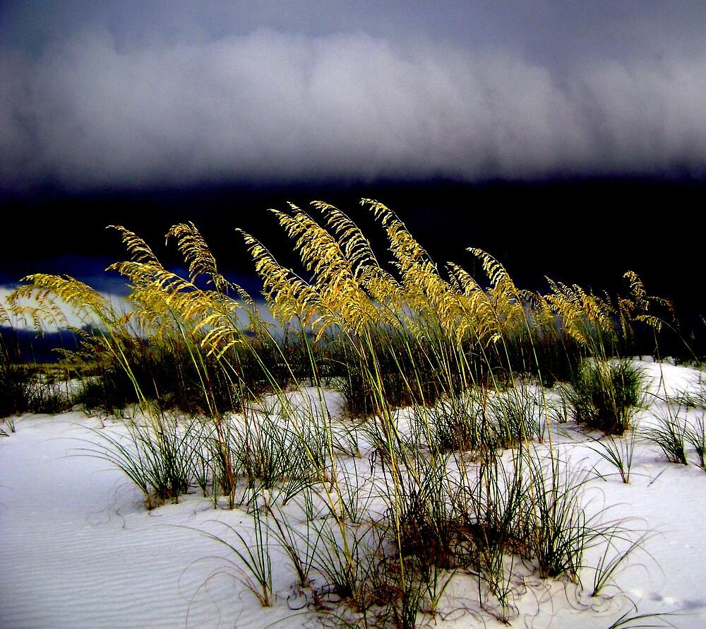 Storm La Beach by J Avary Vox