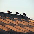 three Blue Martin Birds in a row. by Marty Handy