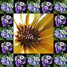 Cape Daisy, Lisianthus and Hydrangea Collage by BlueMoonRose