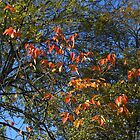 Sunlit Autumn Leaves by BlueMoonRose