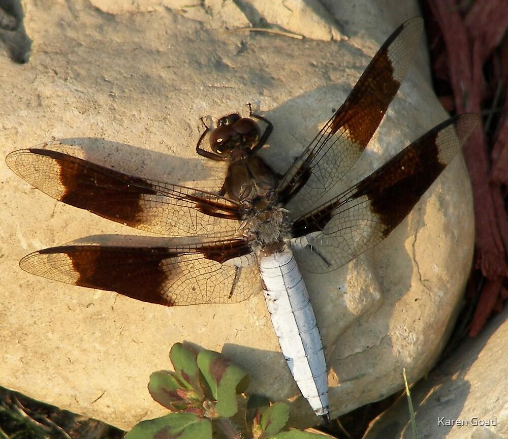 Dragonfly's resting stone by Karen Goad