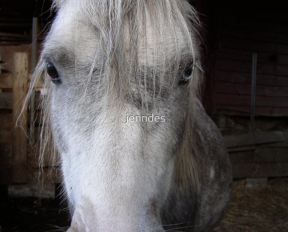 Silver Pony by jenndes