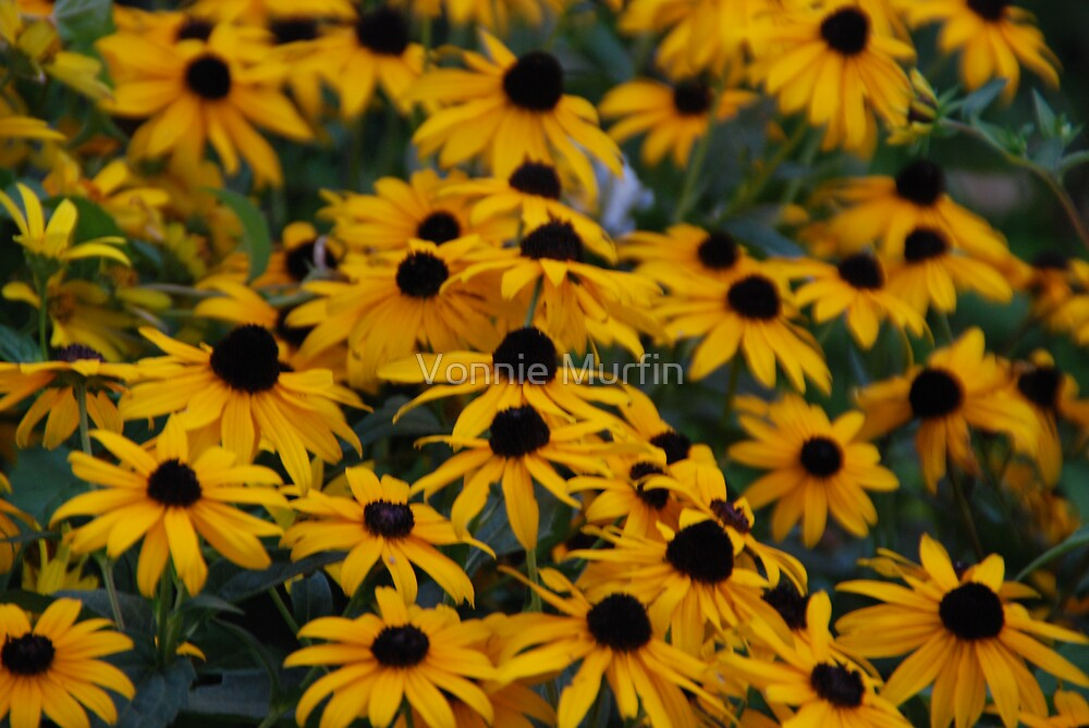Yellow Flowers by Vonnie Murfin