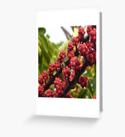 Bee in Red Greeting Card