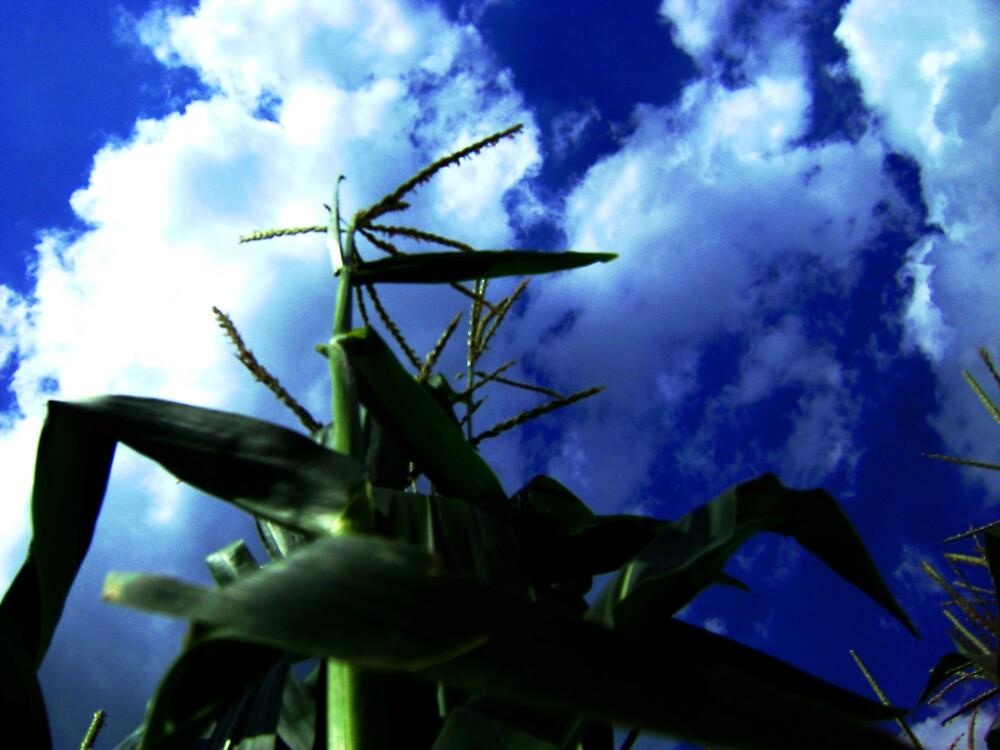 Mighty Corn by Josh B