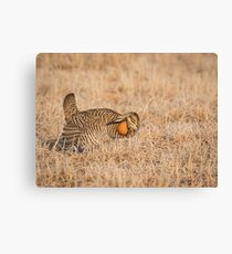 Prairie Chicken 9-2015 Canvas Print