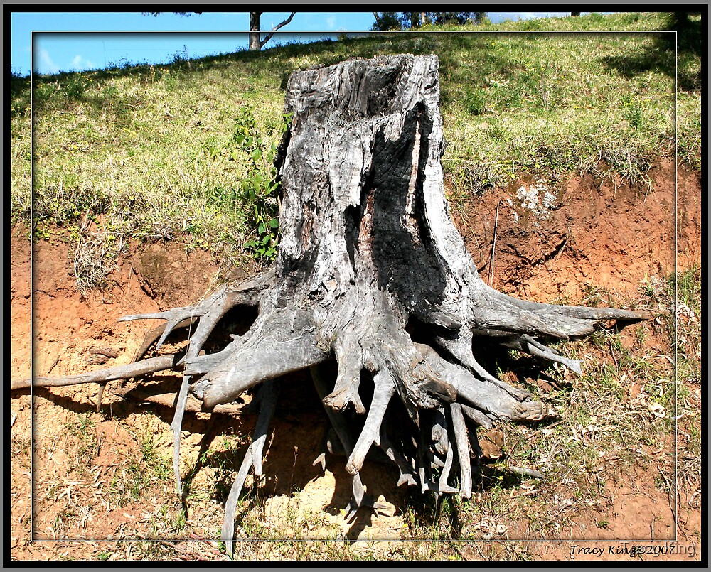 The Stump by Tracy King