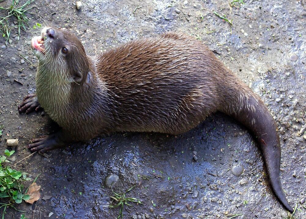 Otter 5 by Geoff46