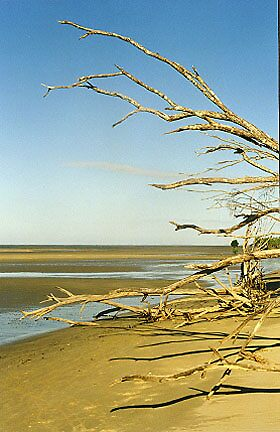 feathered branch beach by tcuzelac