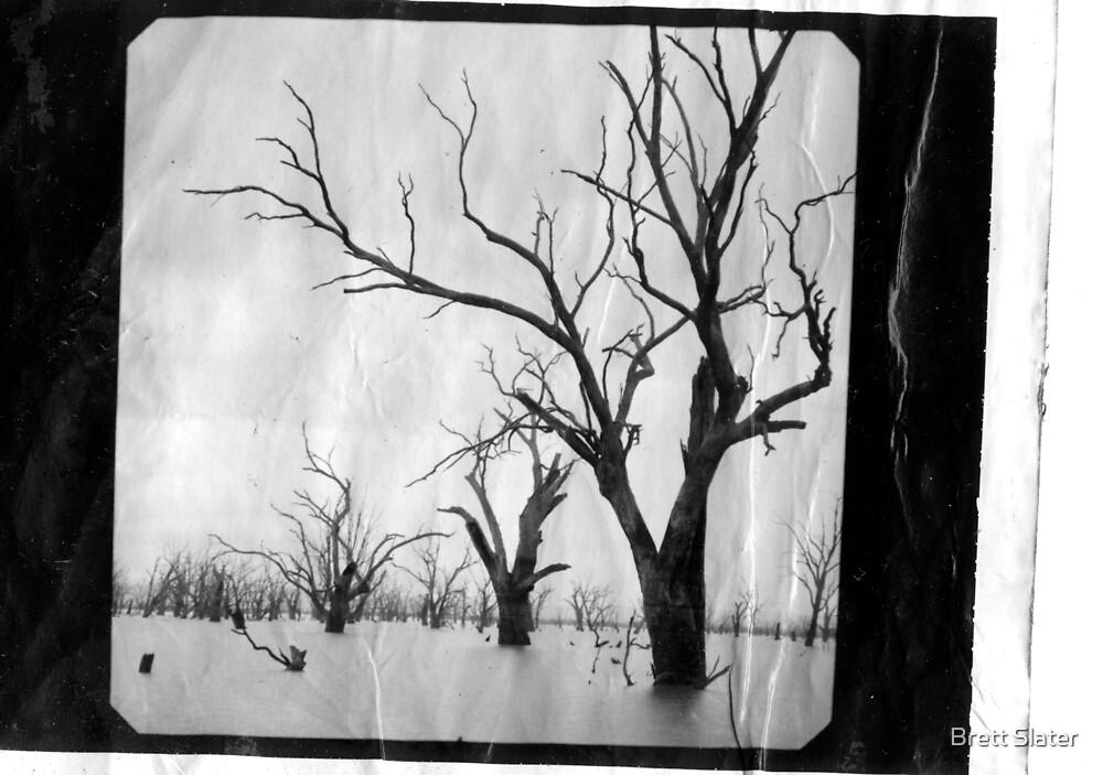 Dead Trees by Brett Slater